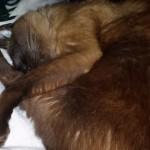 Hershey Cat Chi