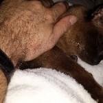 Hershey: The 'Sung' Cat